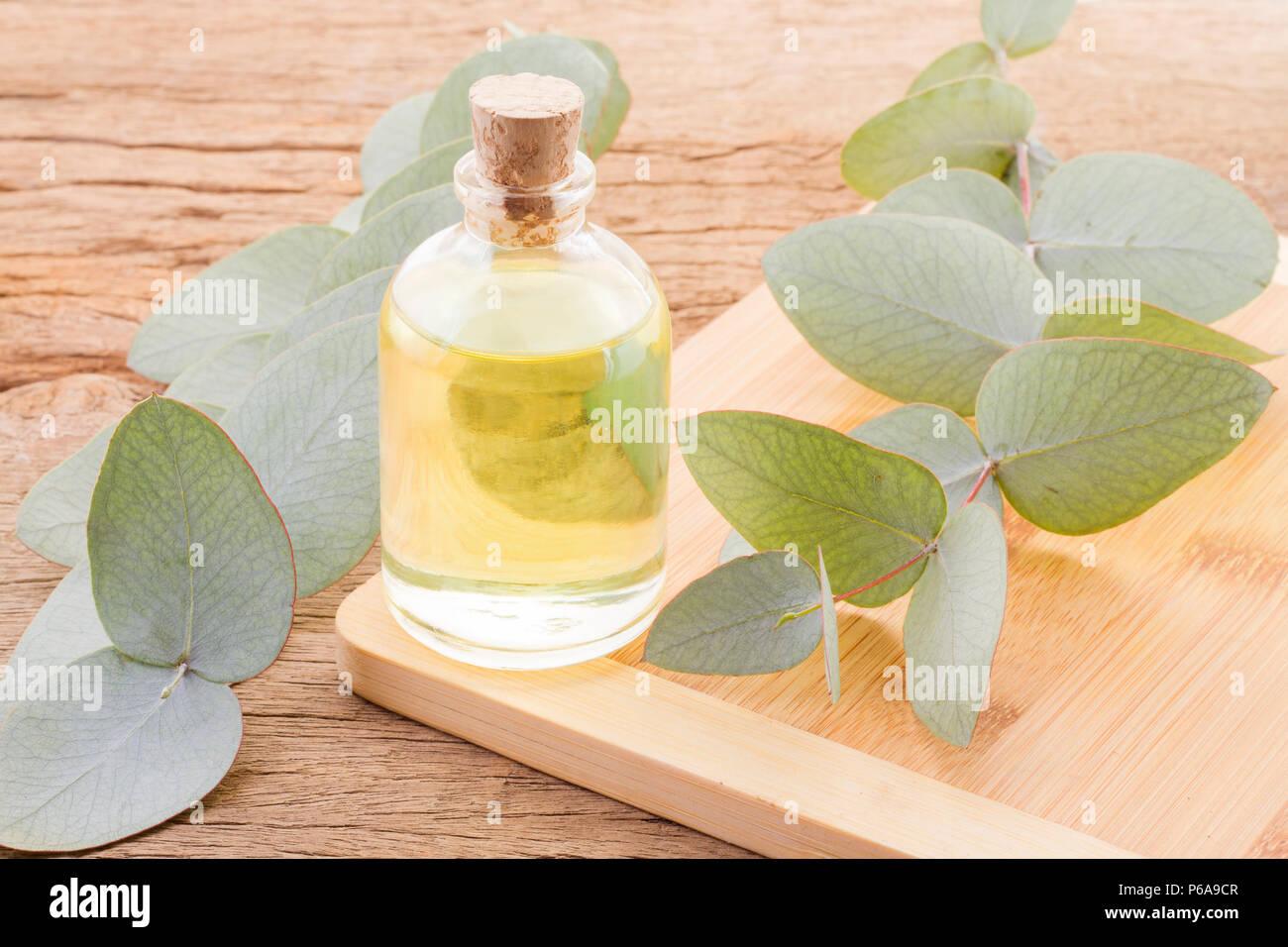 oil and eucalyptus leaves on the wooden table - Eucalyptus deglupta - Stock Image