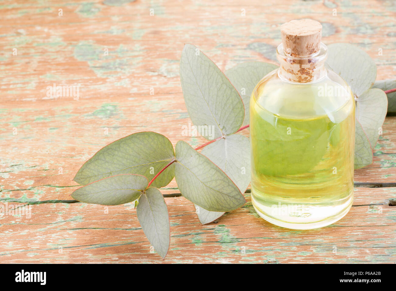 oil and eucalyptus leaves on the wooden table - Eucalyptus deglupta - Stock Image