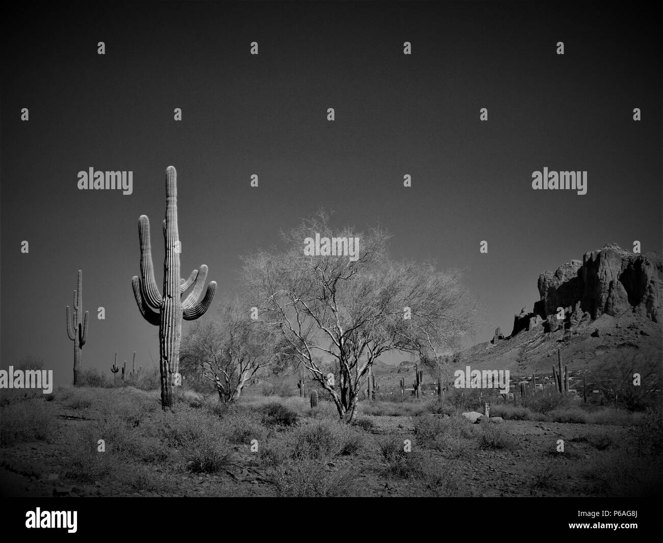 Superstition Mountain, Apache Junction, Arizona and Saguaro cactus in desert climate. - Stock Image