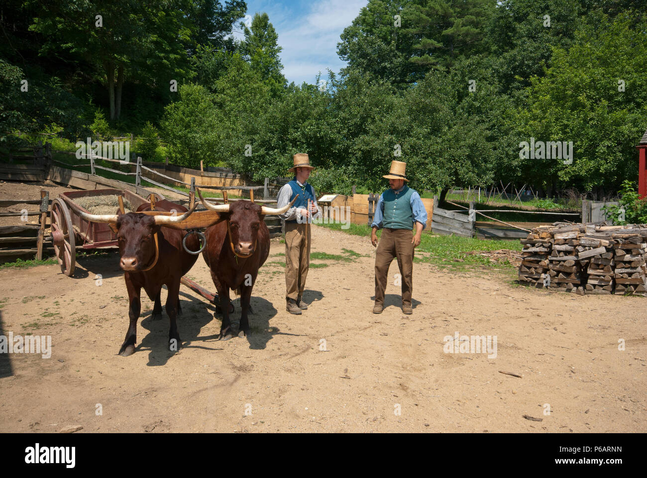 Farmers in traditional dress (nineteenth century) and cows at Old Sturbridge Village, Sturbridge, Worcester County, Massachusetts, USA - Stock Image