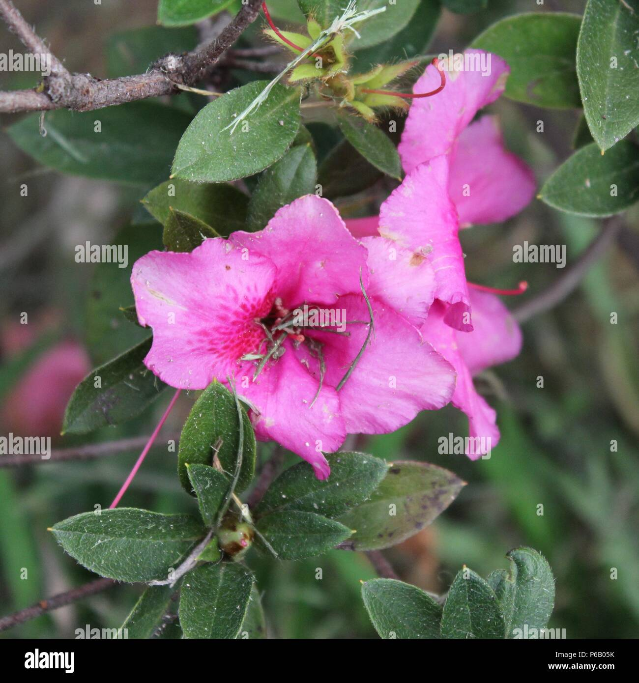 Flower symbolizing nature beauty perfume color decoration flower symbolizing nature beauty perfume color decoration celebrations and cuisinecause they depend on the sun it also represents energy izmirmasajfo
