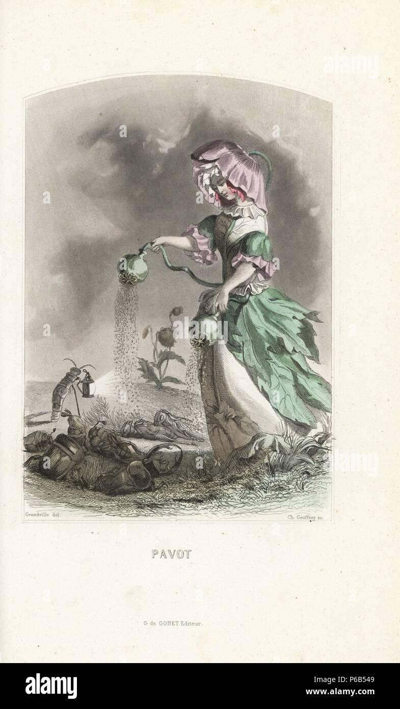 Opium Poppy Flower Fairy Papaver Somniferum In Flower Bonnet And