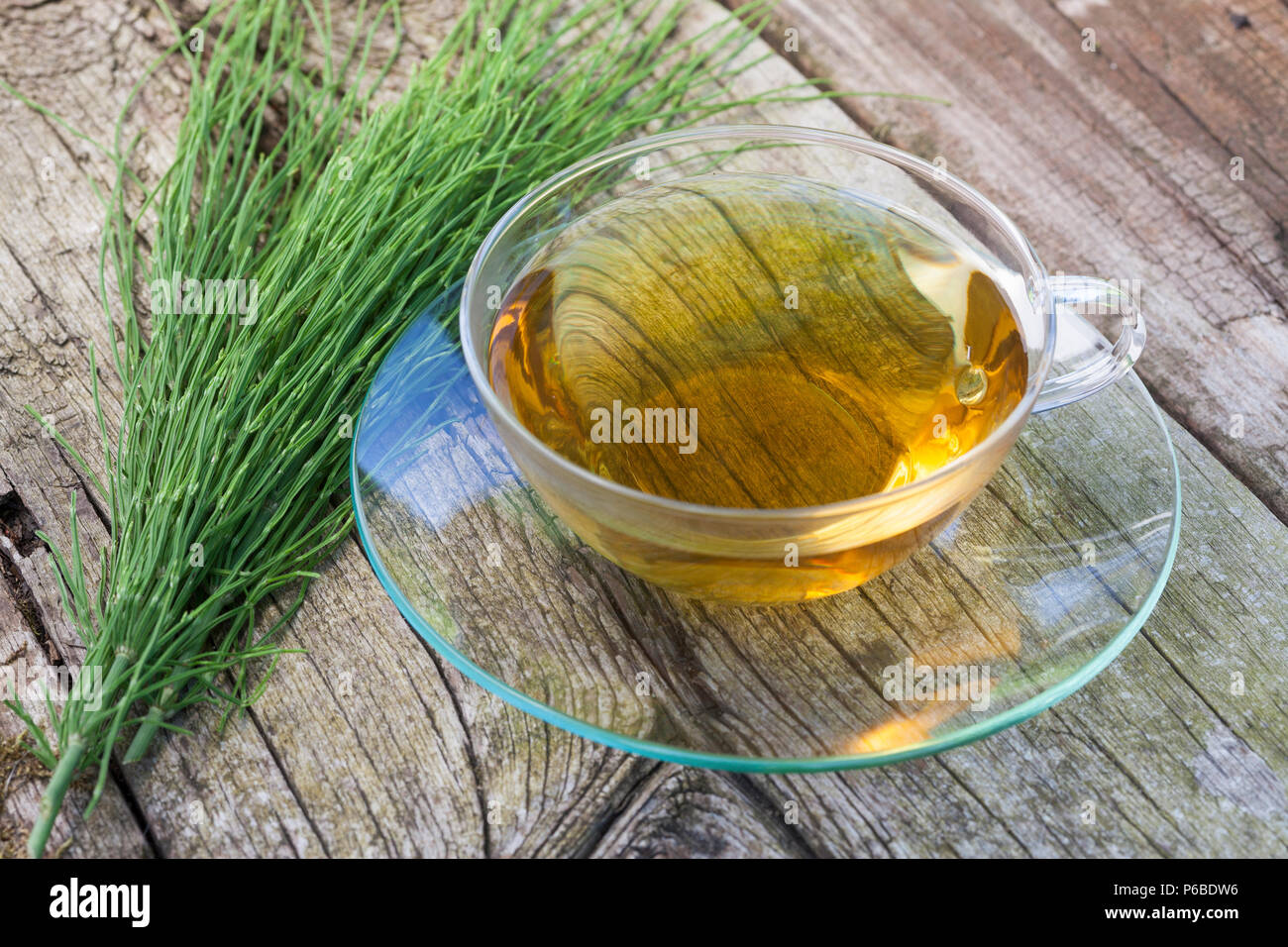 Acker-Schachtelhalm-Tee, Schachtelhalm-Tee, Schachtelhalmtee, Tee aus Ackerschachtelhalm, Heiltee, Kräutertee, Ackerschachtelhalm, Schachtelhalm, Zinn - Stock Image