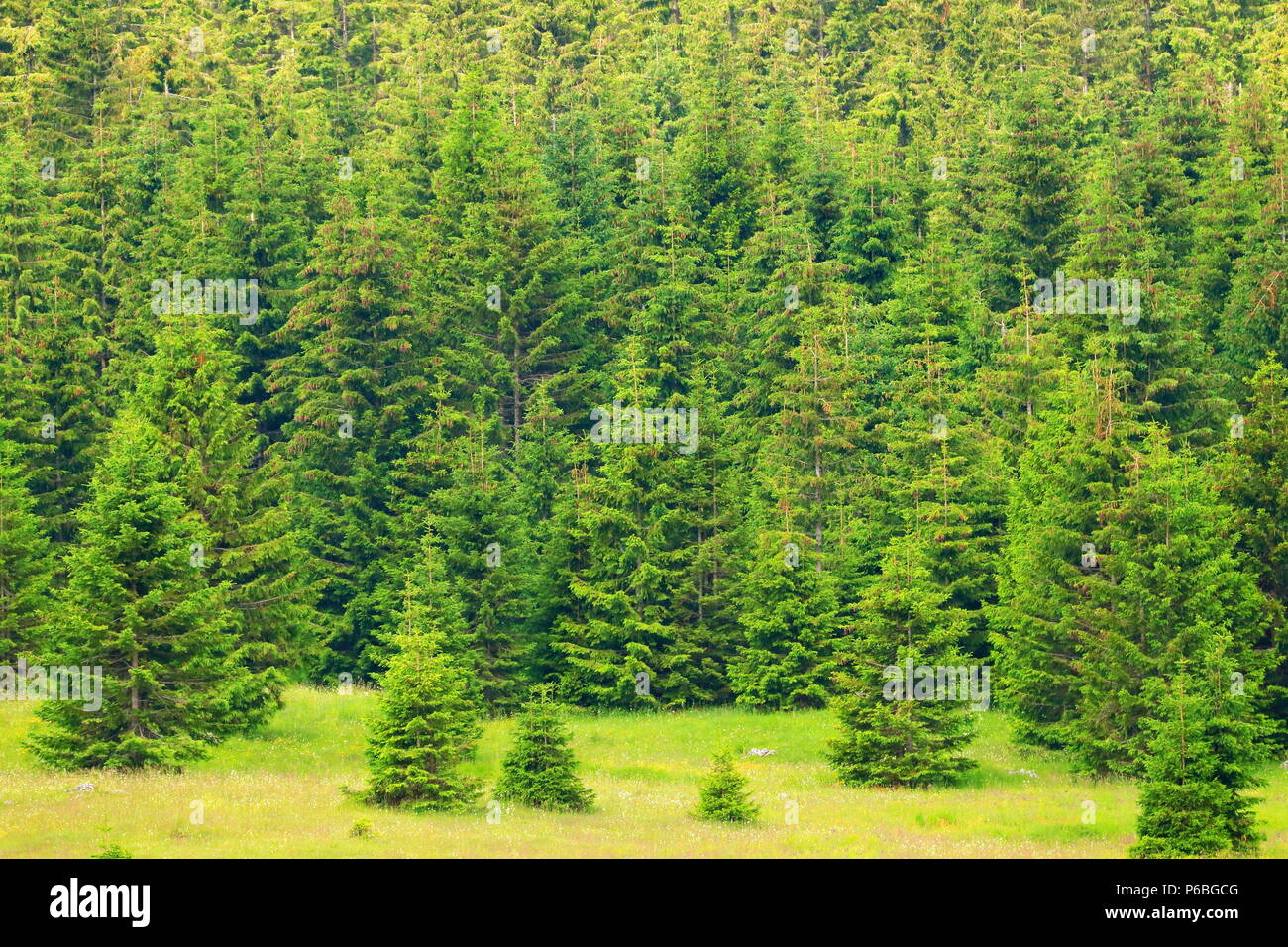 Forest landscape in Gorski Kotar area, Croatia Stock Photo