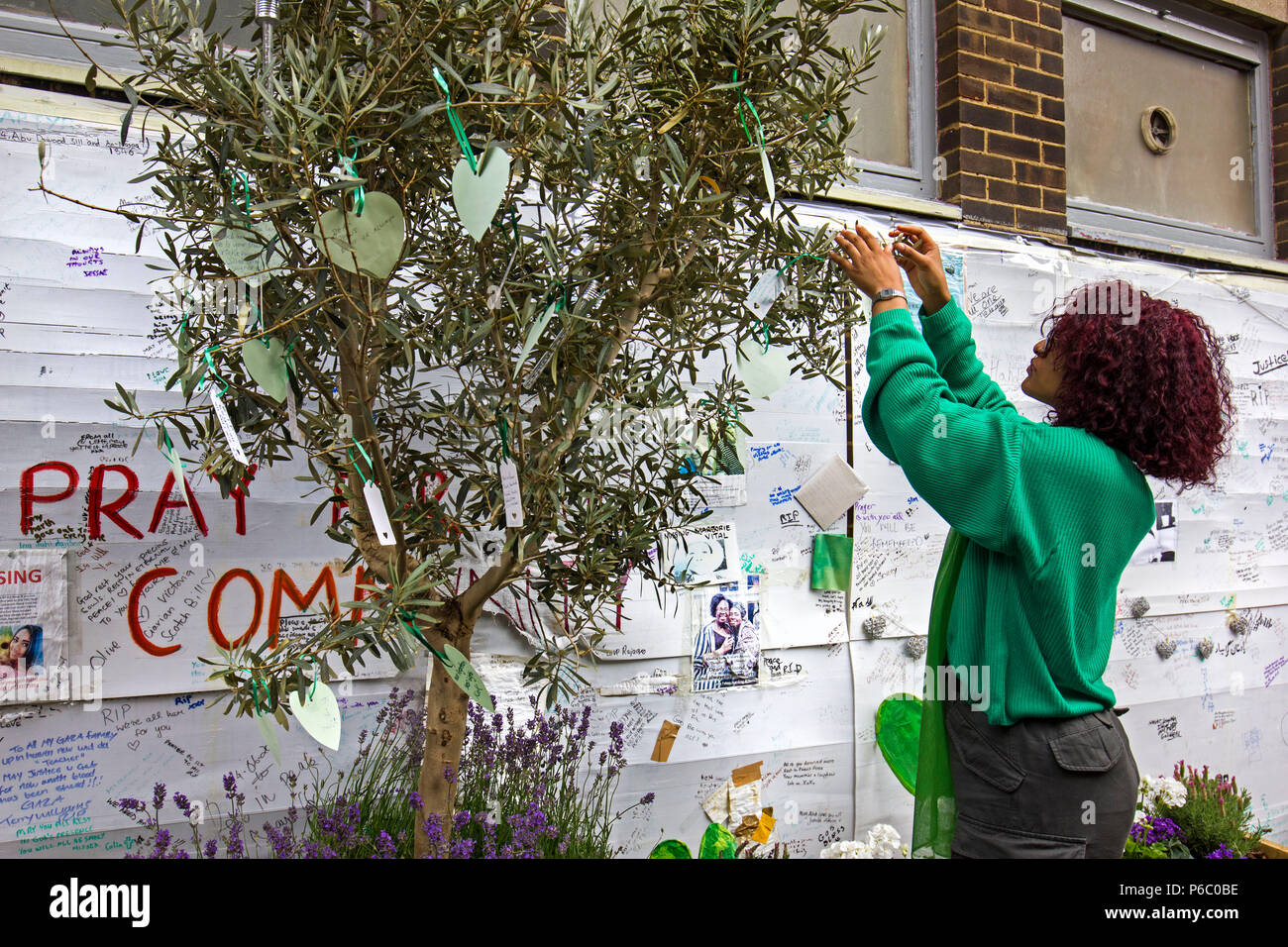 The first anniversary of the 24-storey Grenfell Tower block of public housing flats fire which claimed 72 lives. Young woman hanging messages/prayers on an Olive tree,  South Kensington, London, UK, 14th June 2018. Stock Photo