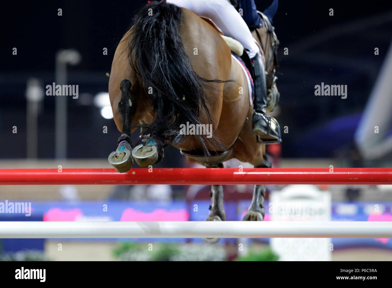 Jumping Horse High Resolution Stock Photography And Images Alamy