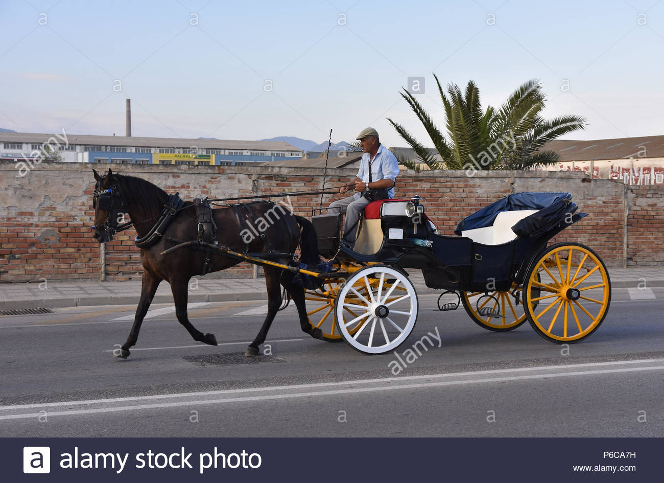 Man driving horse-drawn carriage on the road in Malaga Andalusia Southern Spain. Stock Photo