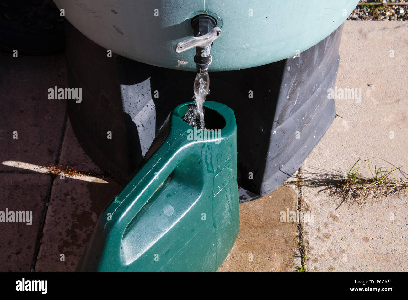Filling watering can with rainwater from waterbutt to water plants during drought saving cost of metered water - Stock Image