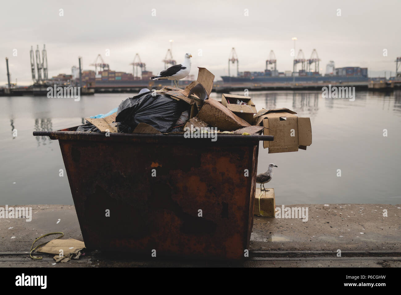 Seagulls perching on waste container Stock Photo