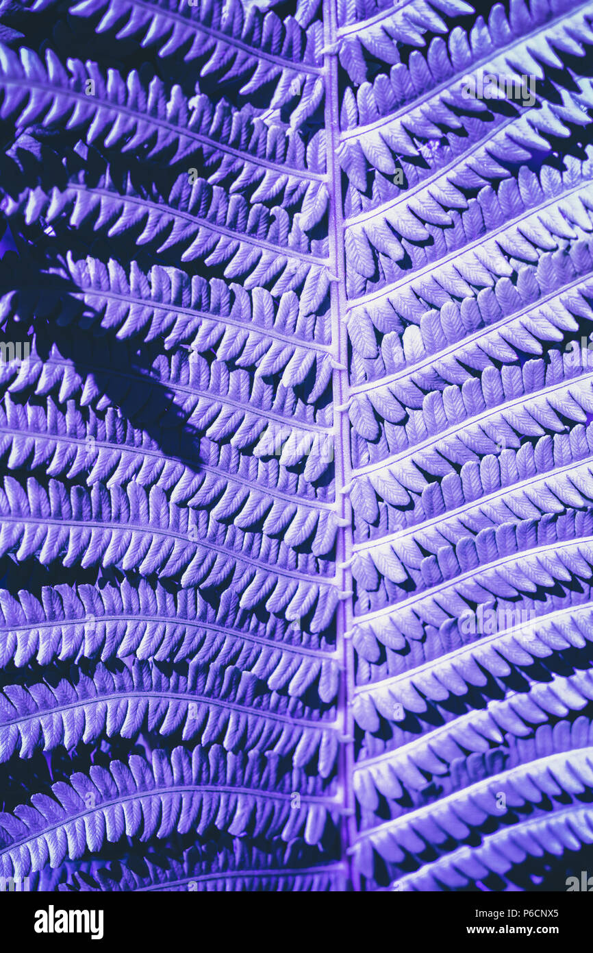 Leaves of fern with sunlight toned by ultraviolet. Closeup. Nature background. - Stock Image