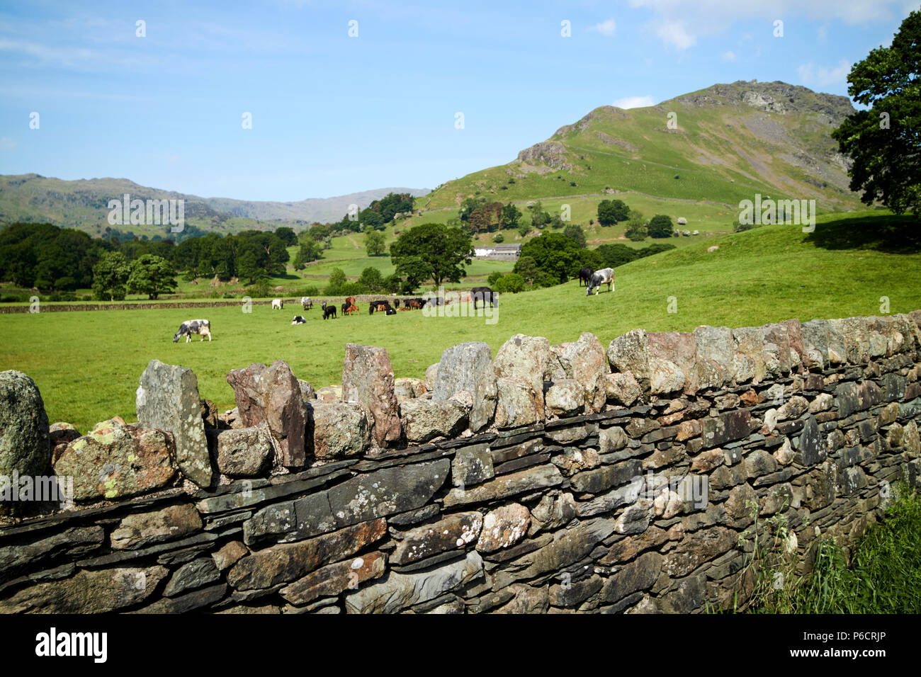 lakeland stone slate dry stone wall with fields and hills near grasmere in the lake district cumbria england uk - Stock Image