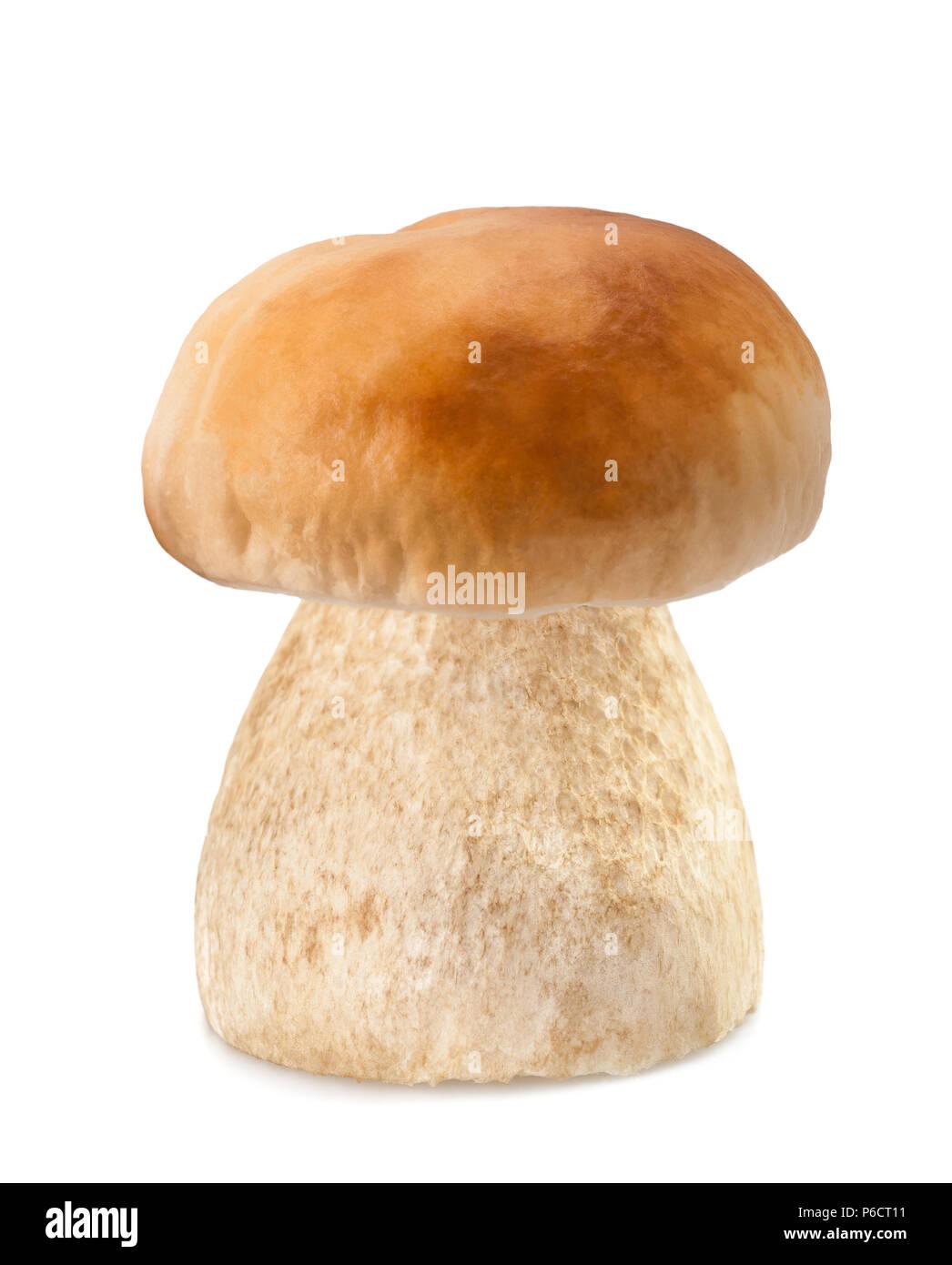 Mushroom penny bun  isolated  on white background - Stock Image