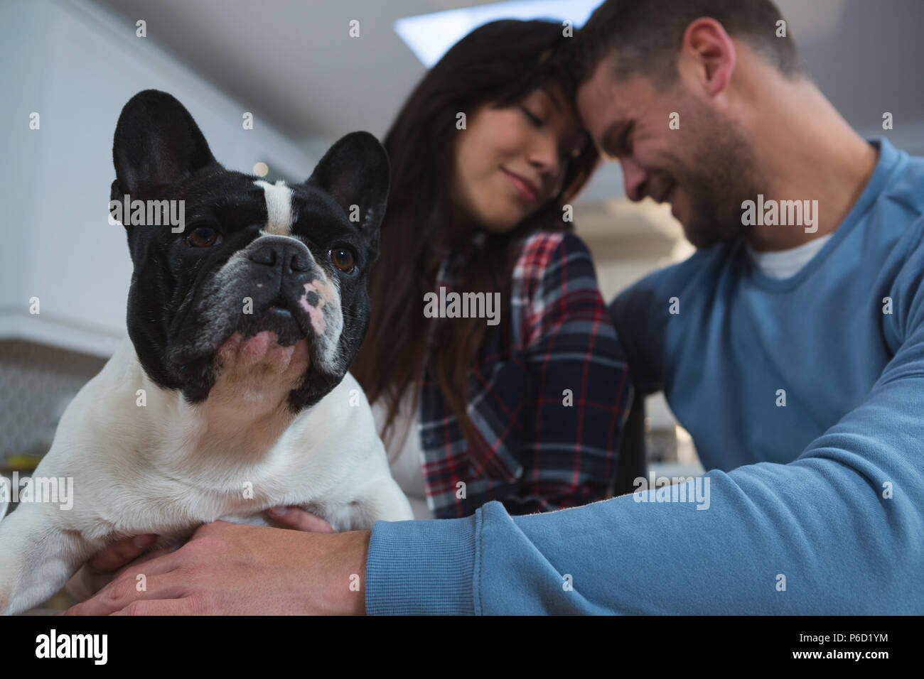 Couple playing with their pet dog in kitchen at home Stock Photo