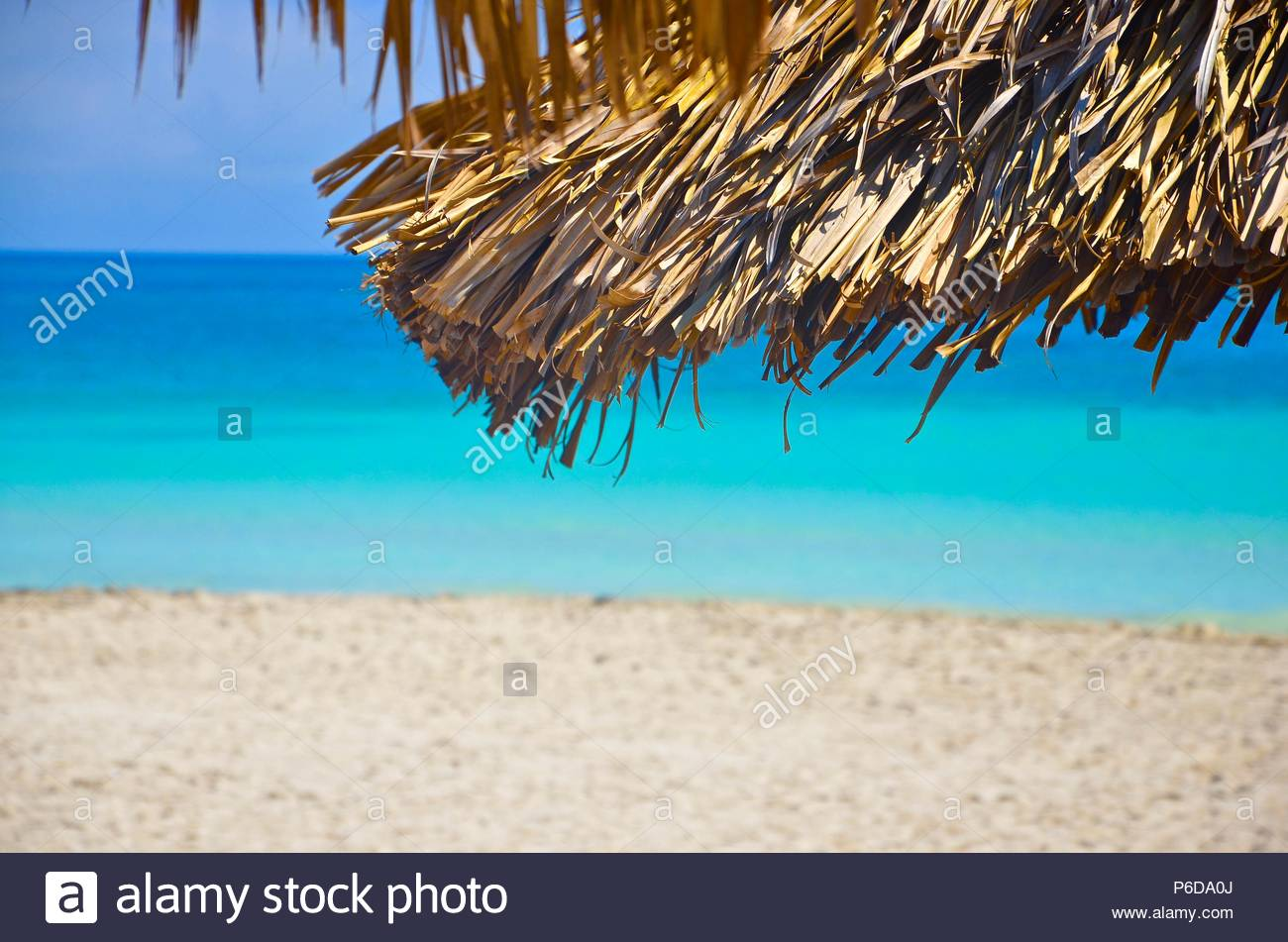 Tourquoise Caribbean sea on Varadero beach in Cuba, shellfish, hand, sun, vacation, palm trees, sand, waves, horizon, landscape, woman's hand - Stock Image