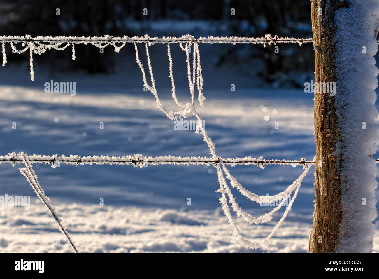 Extremely frosted barbed wire and fence post, German countryside - Stock Image