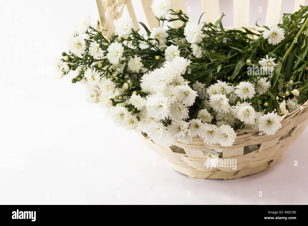 Asters white flowers in a basket on white background stock photo asters white flowers in a basket on white background mightylinksfo
