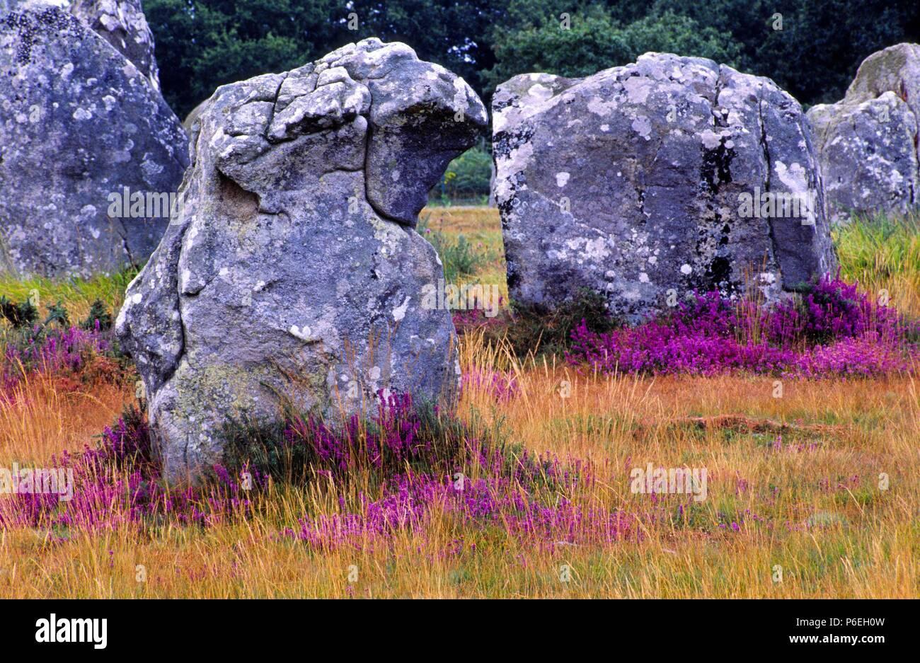 Alineamiento megalitico de Carnac-Kermario. Morbihan. Bretaña.Francia. - Stock Image