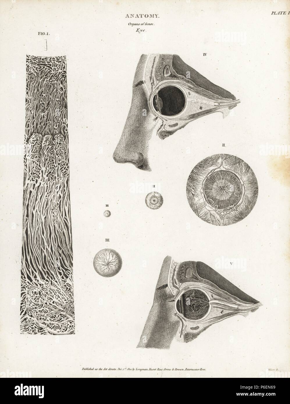 Anatomy Eye Human Drawing 19th Century Sciences Stock Photos ...