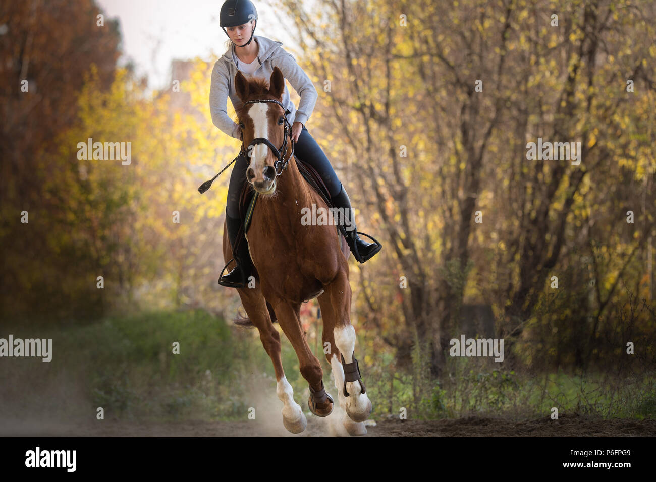 Young pretty girl - riding a horse with backlit leaves behind - Stock Image