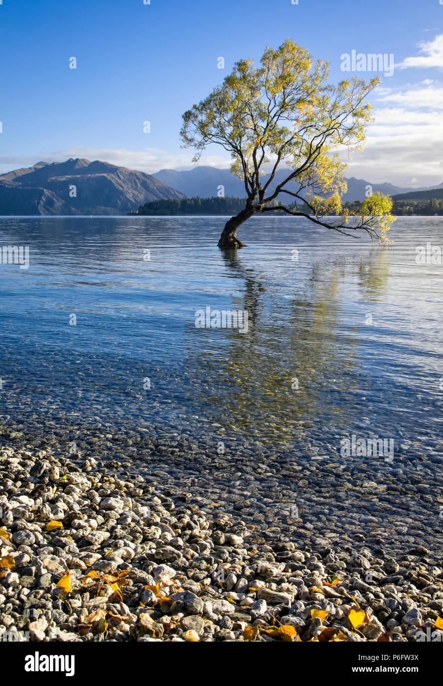The lone tree on Lake Wanaka, South Island, New Zealand. - Stock Image