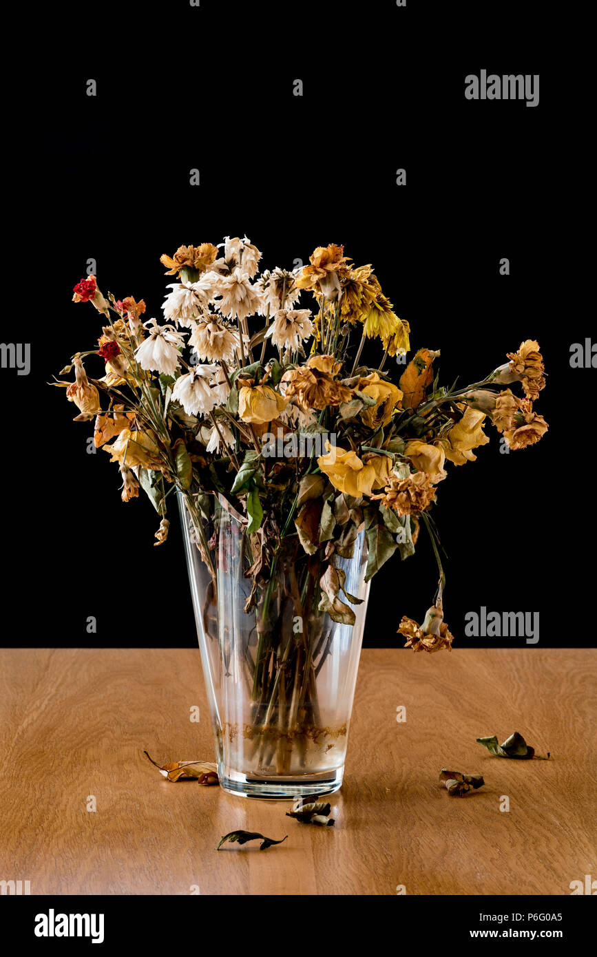 Vase of dead and decaying flowers. Representing feelings of loneliness, sadness, depression and loss of life. - Stock Image