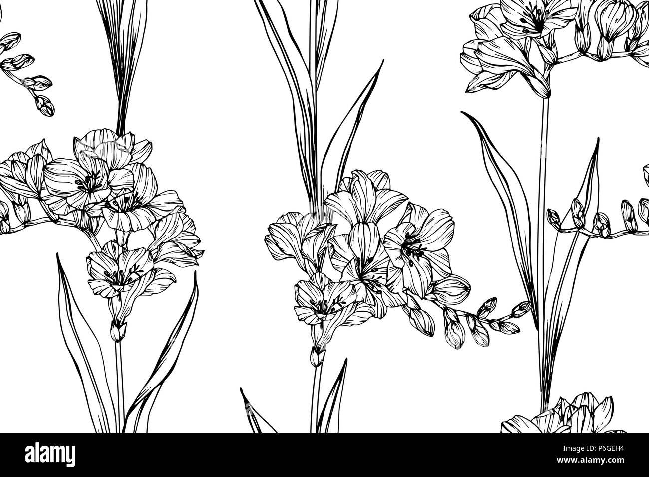 779fb501e Seamless Freesia flower pattern background. Black and white with drawing  line art illustration.