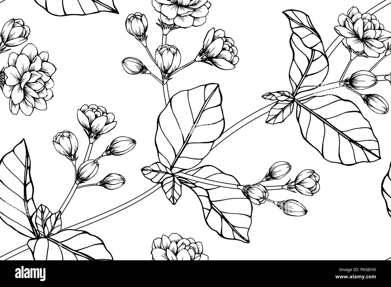 Seamless Jasmine Flower Pattern Background Black And White With