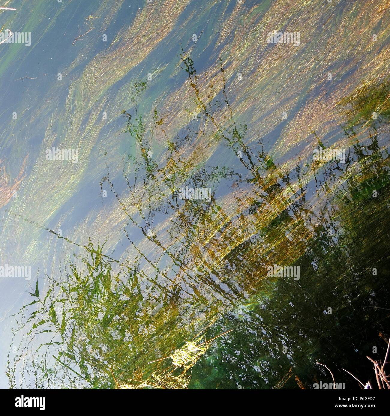 Reflection of reeds on calm river water - Stock Image