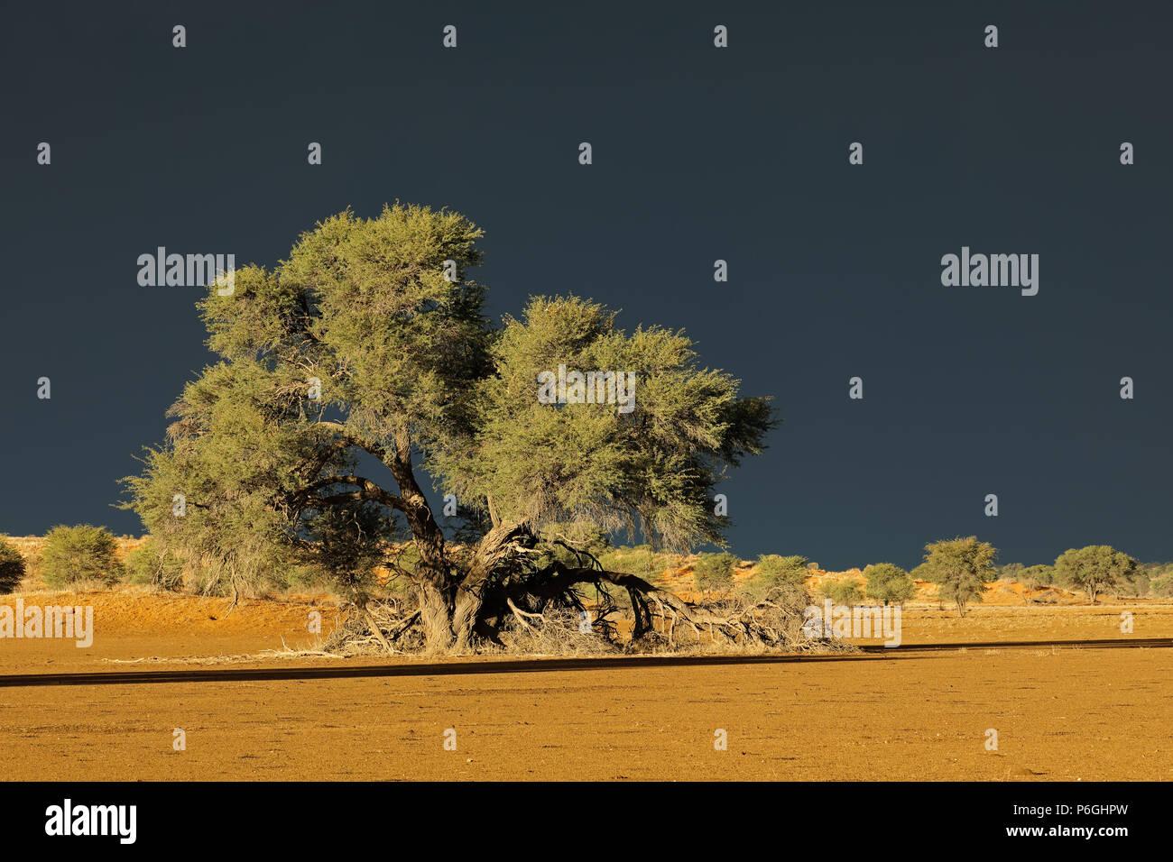 Desert landscape against a dark sky of an approaching storm, Kalahari desert, South Africa Stock Photo