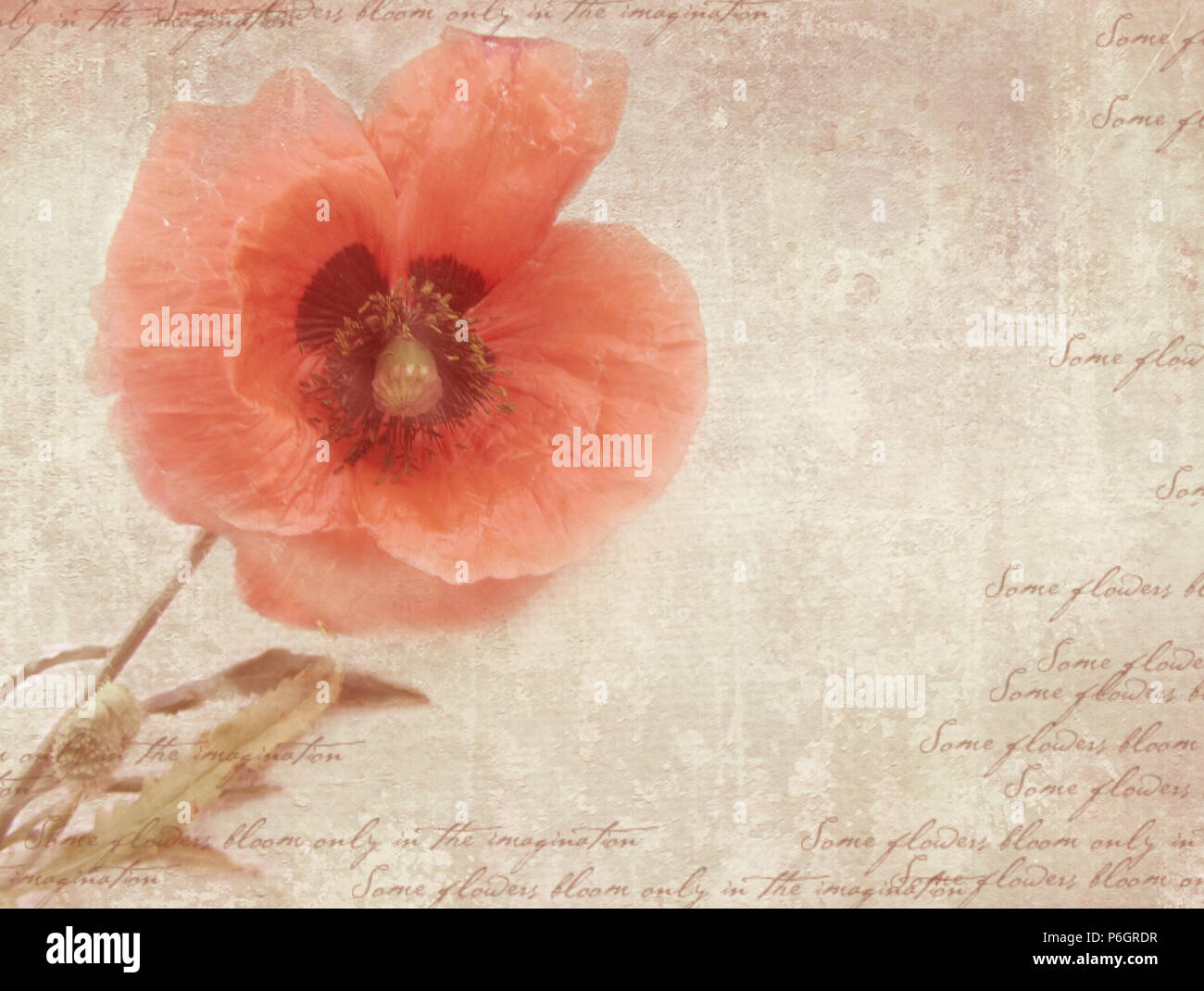 grungy retro background with poppy flowers a vintage styled collage