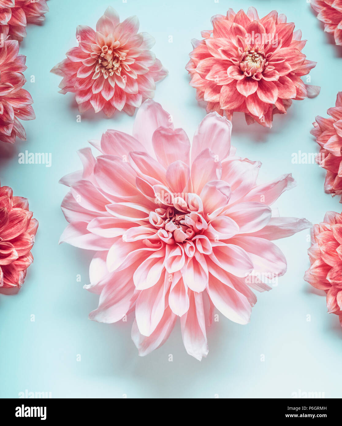 Close Up Of Pastel Pink Color Flowers On Turquoise Background Top