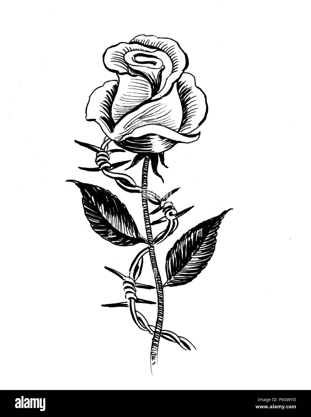 Hand Drawn Rose Flowers Rose Black And White Vector Outline Icon Flower  Logotype Concept Icon Rose Logo Stock Illustration - Download Image Now -  iStock