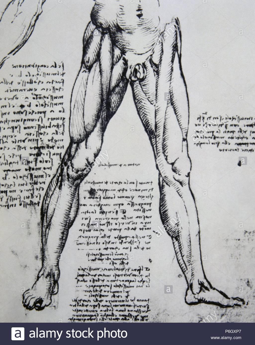 Leonardo Da Vinci 1452 1519 Italian Polymanth Genius