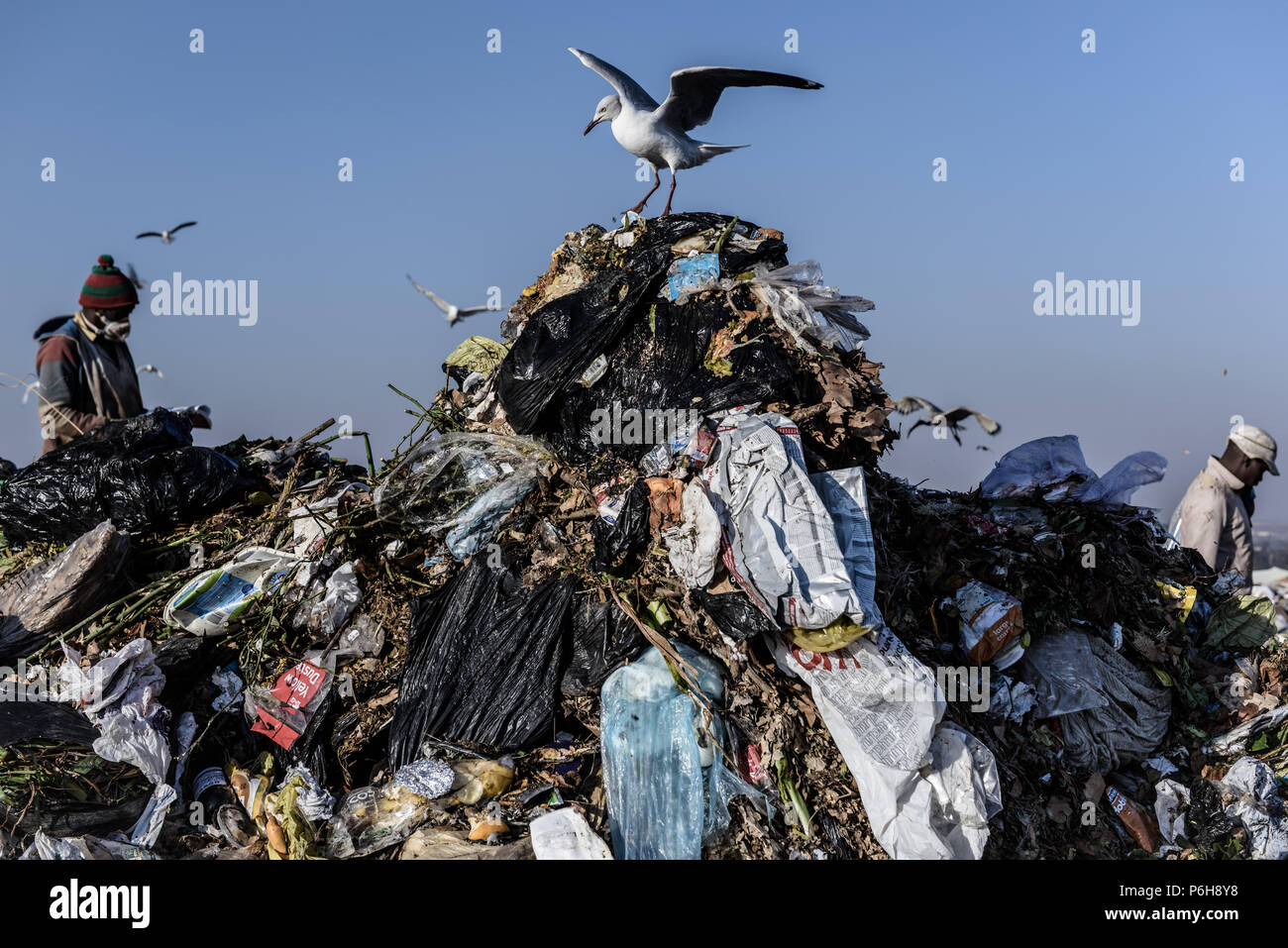 Pickers sorting through the Robinson Deep landfill in the South African commercial capital of Johannesburg - Stock Image