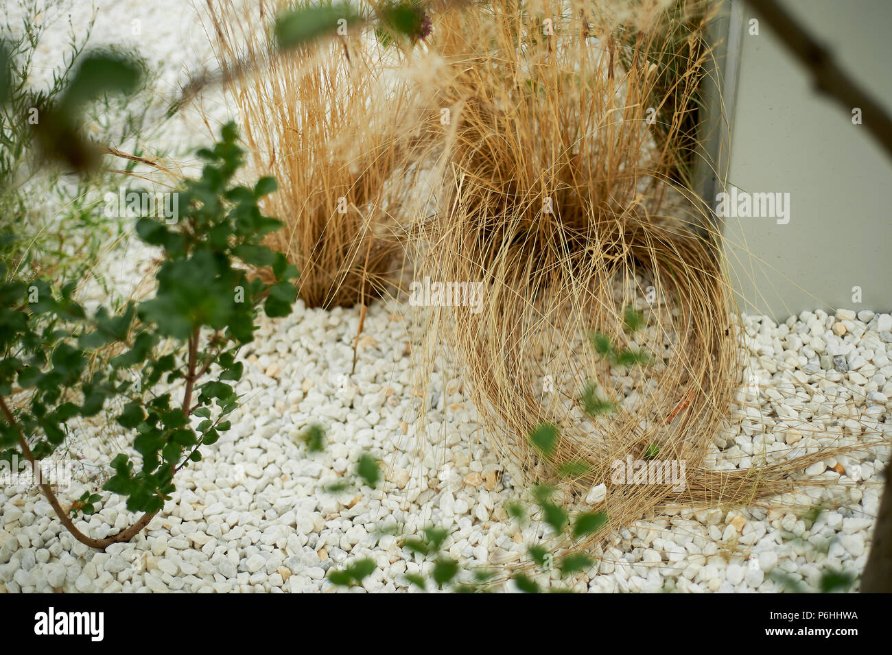 Dried Flowers On A Background Of White Pebbles Easy Park And Garden