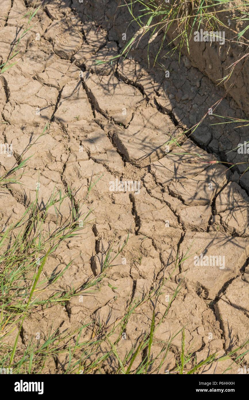 Dry water channel at field edge. Metaphor water shortage, German drought, possible famine, heatwave concept, heatwave crops, gardening in heatwave - Stock Image