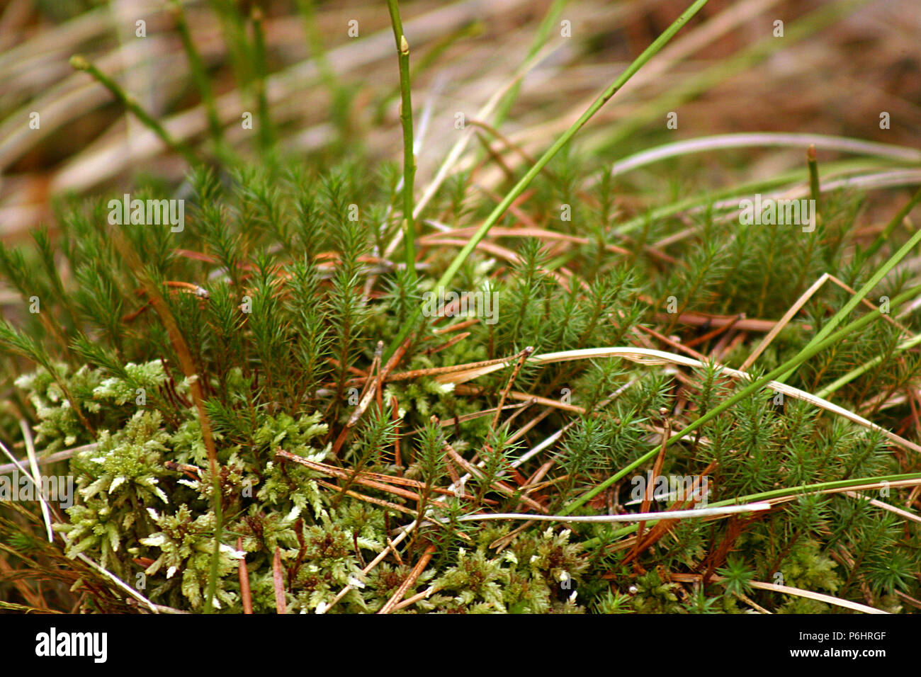 Small plants growing at high altitude - Stock Image