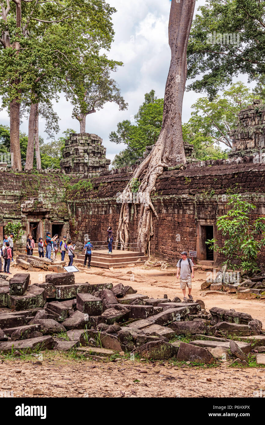 Angkor, Cambodia - Nov 17, 2017: Tourists at Ta Prohm temple ruins overgrown with trees at Angkor, Cambodia, built in late 12th centuries.it was found - Stock Image