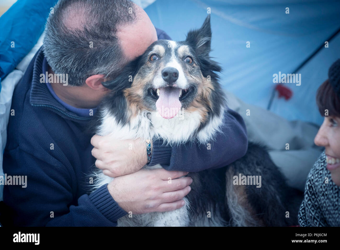 nice beautiful dog border collie really happy and joyful concept hugged from his owner caucasian middle age man. woman look them. family alternative c - Stock Image