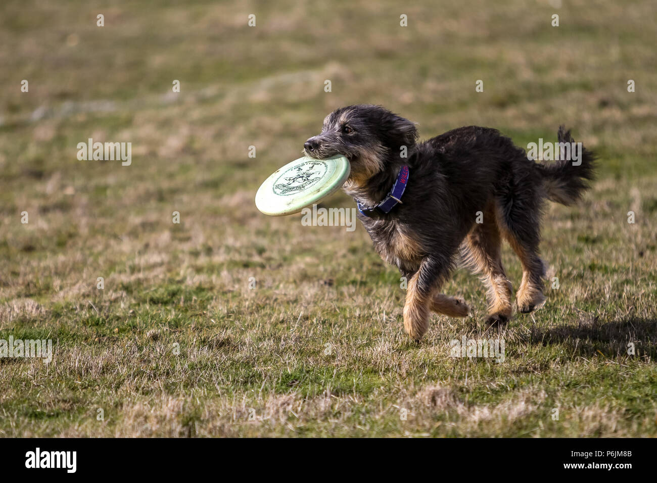 Obstacle Course Dogs Dog Show Stock Photos Amp Obstacle