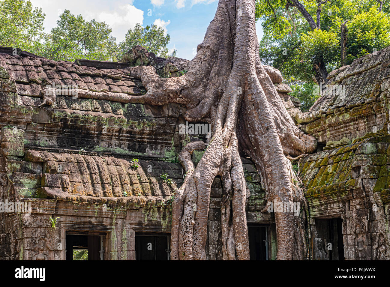 Ta Prohm  the temple ruins overgrown with trees at Angkor, Siem Reap , Cambodia, built in late 12th and early 13th centuries.it was founded by the Khm - Stock Image