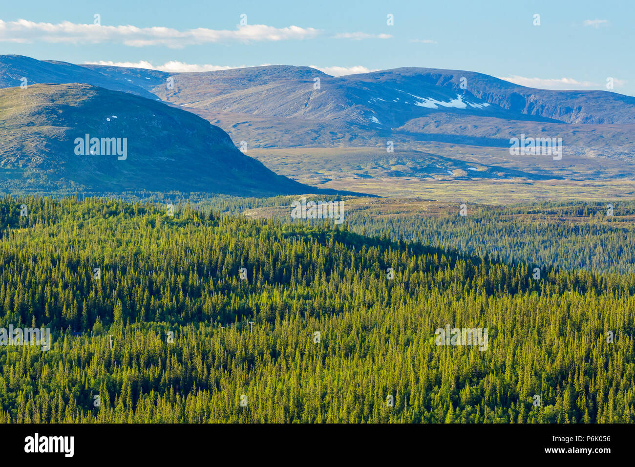Woodland landscape view with mountains in the north - Stock Image