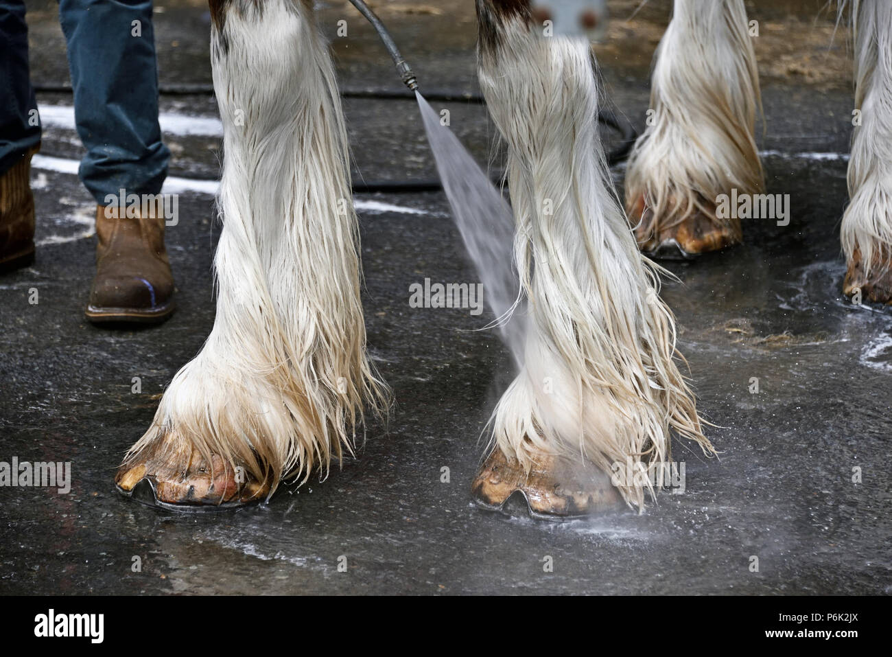 Washing hooves of Clydesdale horse. Royal Highland Show 2018, Ingliston, Edinburgh, Scotland, United Kingdom, Europe. - Stock Image
