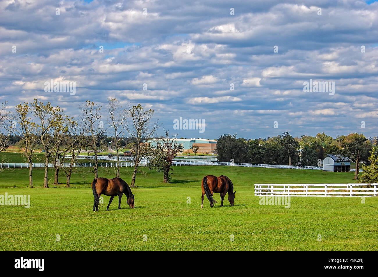 Horses at the Kentucky Horse Park - Stock Image