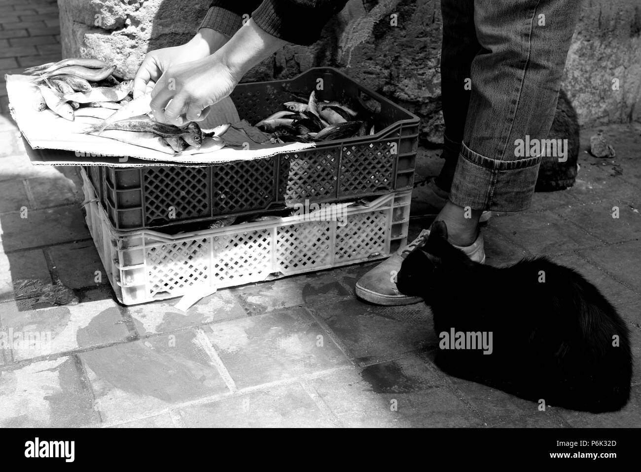 B&W close up of black cat sitting watching longingly as man seen knees down only arranges fresh fish for sale on crate in street, Essaouira, Morocco - Stock Image