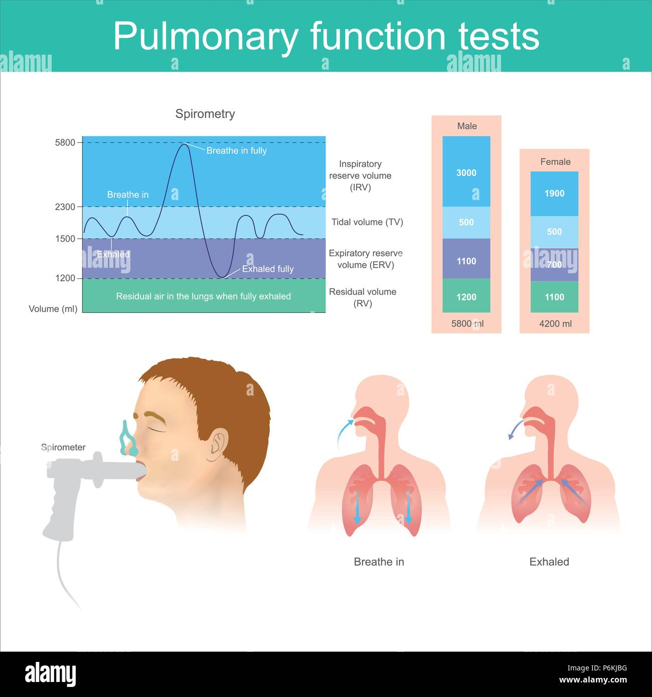 Pulmonary function tests. Testing for volume of air in the lungs during breathe in and exhaling fully. - Stock Image