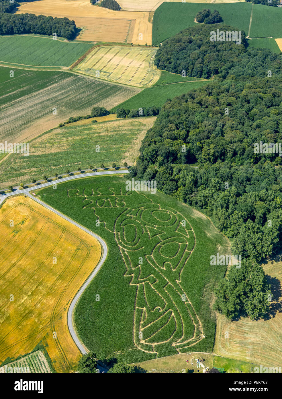 Corn maze with Russian football emblem in Cappenberg, Farm Lünemann, Selm, Ruhr, Nordrhein-Westfalen, Germany, DEU, Europe, aerial view, birds-eyes vi - Stock Image