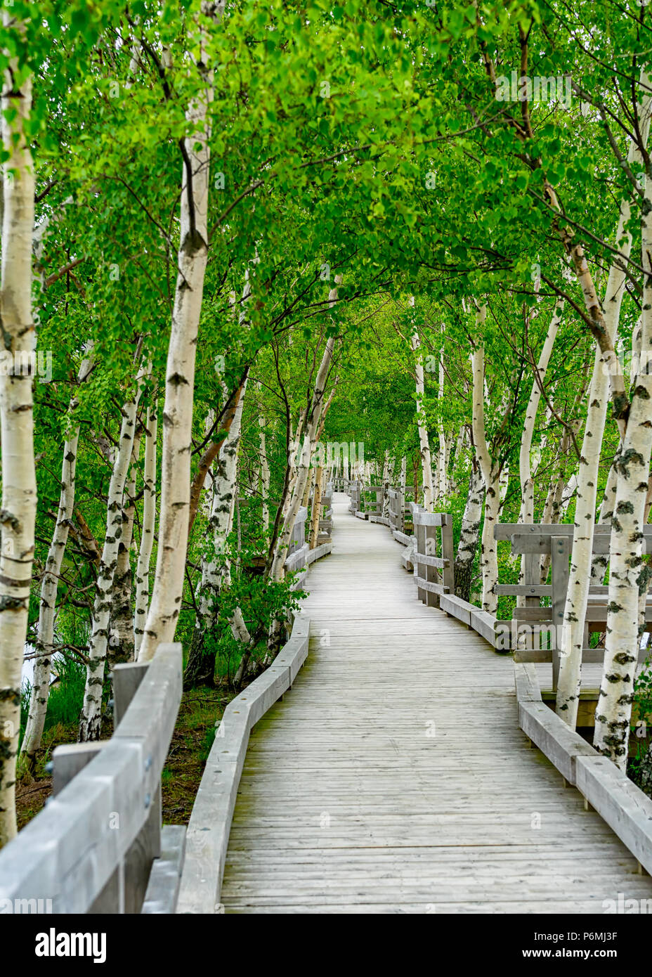 Boardwalk over the lake and marsh at the Sackville Waterfowl Park in Sackville, New Brunswick, Canada. - Stock Image