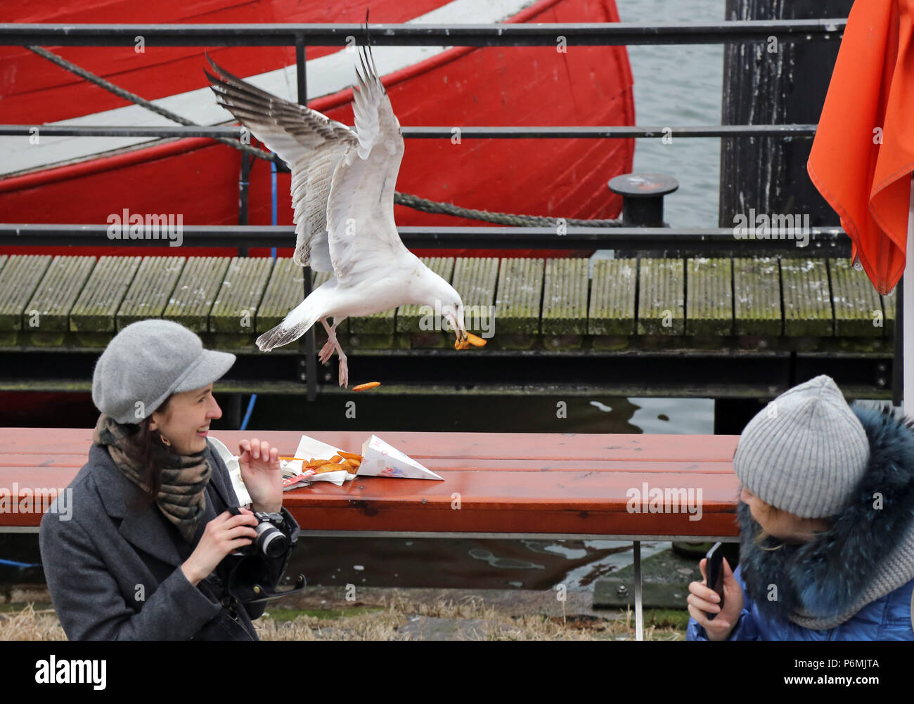 Warnemuende, Silbermoewe grabs some French fries in the flight - Stock Image