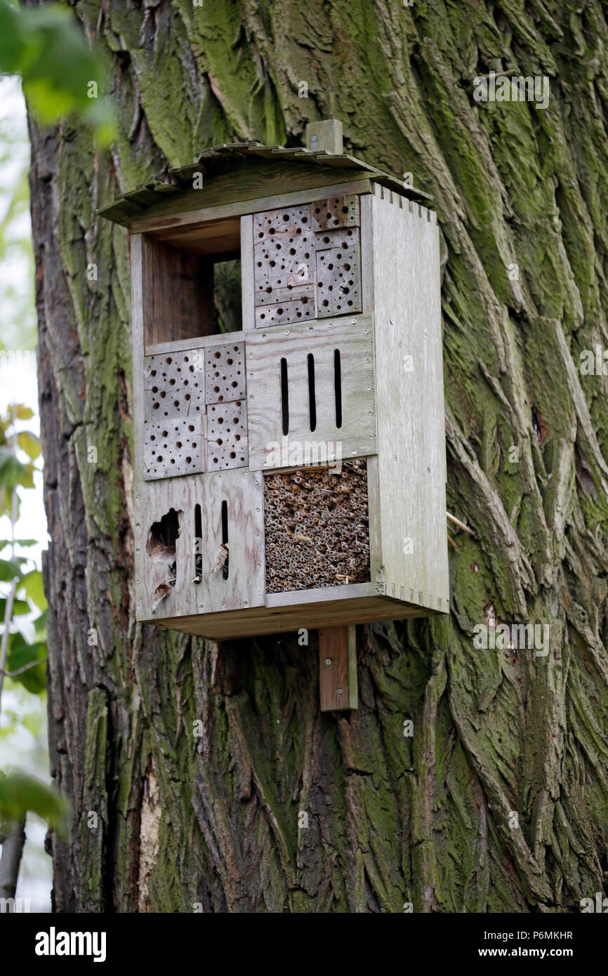 Hoppegarten, Germany - Insect Hotel - Stock Image